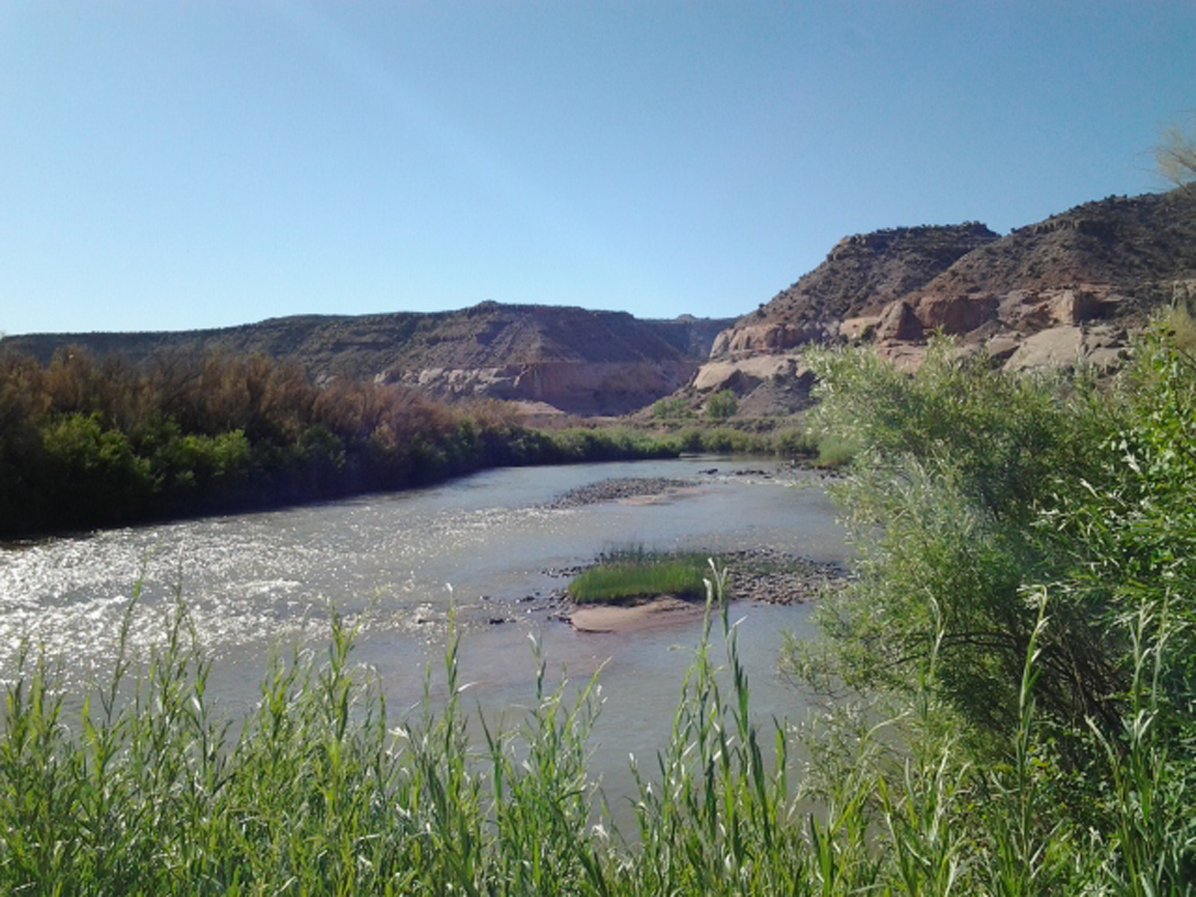 Lush riparian habitat along the Dolores River provides significant research opportunities at the University of Utah's Rio Mesa Center.