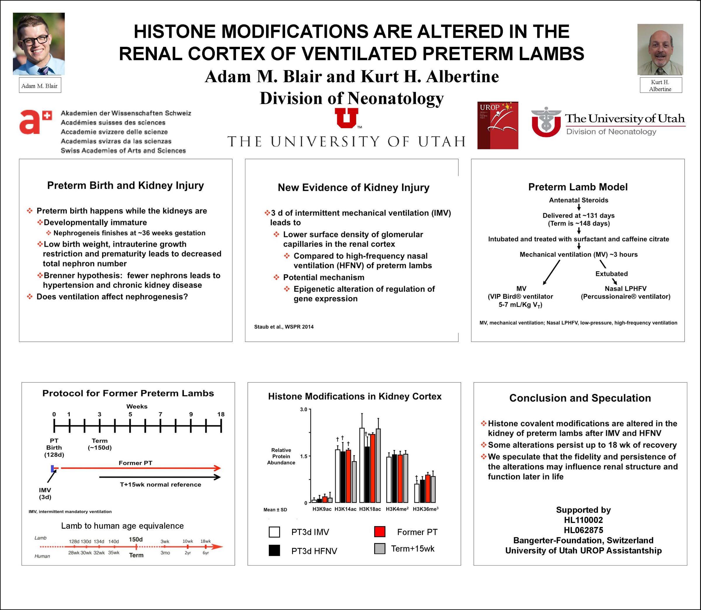 Histone modifications are altered in the renal cortex of ventilated preterm lambs.