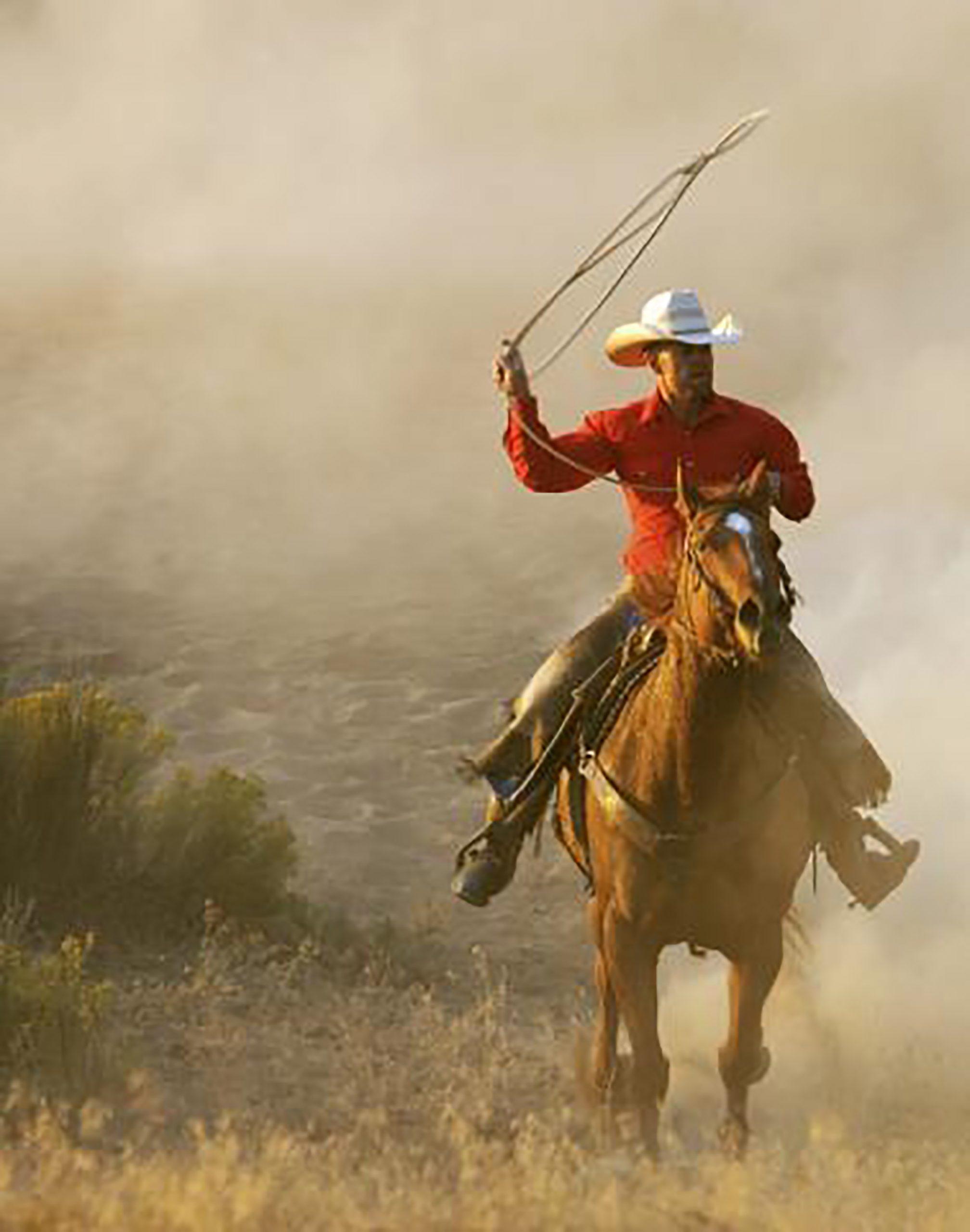 Horse and cowboy rider.