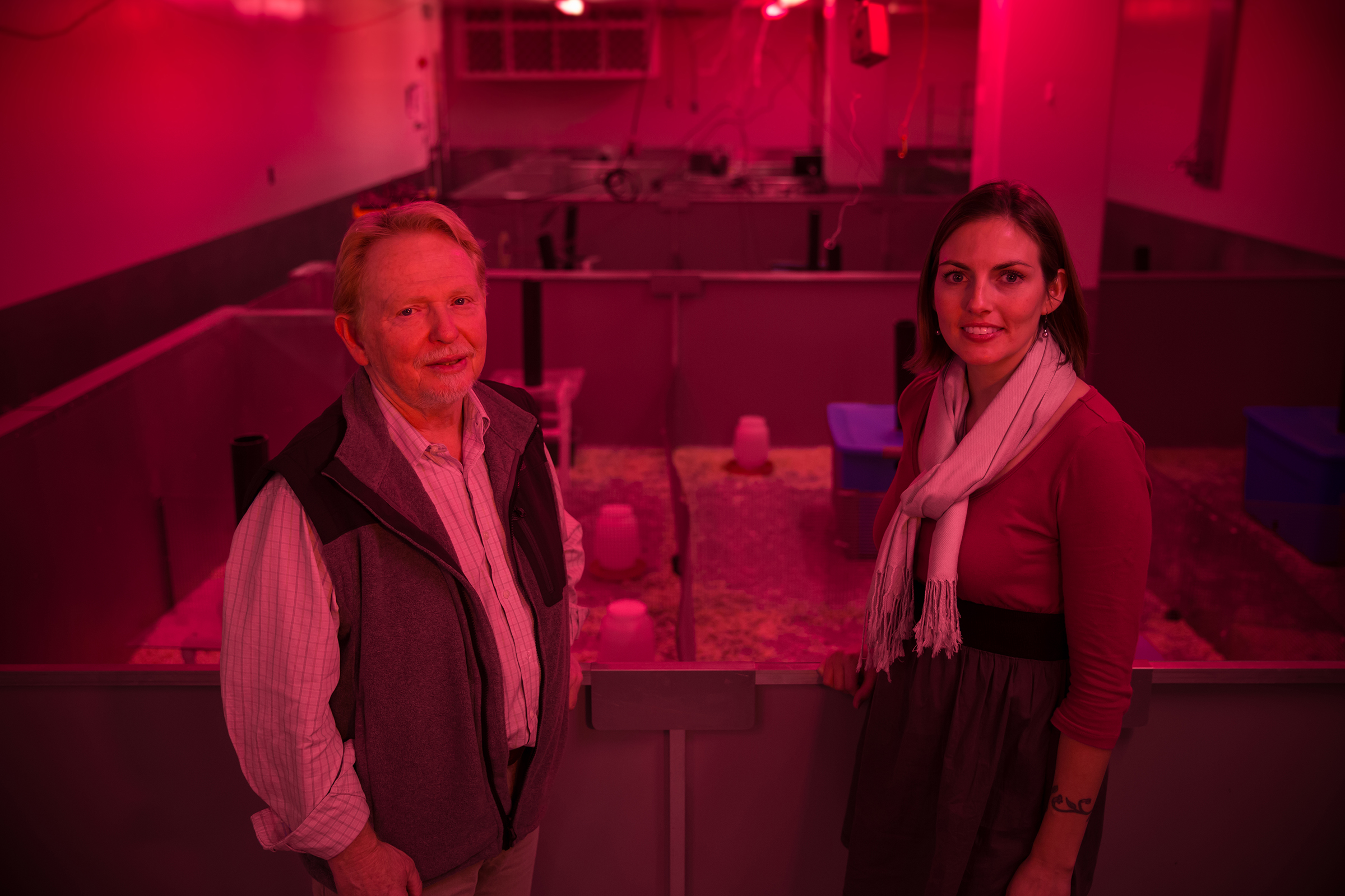 A University of Utah test detects hidden toxic effects by subjecting mice to competition for resources. University of Utah biology professor Wayne K. Potts and biologist Shannon M. Gaukler, who recently completed a doctoral degree at the U, stand in front of the test enclosure, illuminated in red light that mice perceive as nightfall.