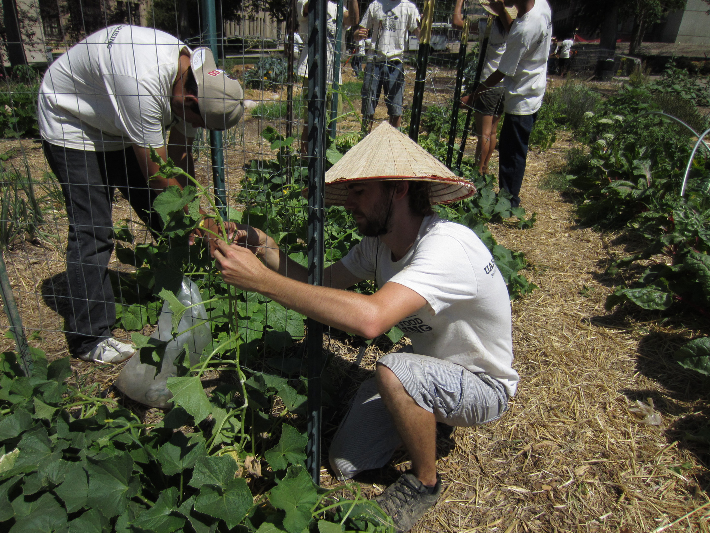 Students learn about sustainable food systems while working in the campus garden.