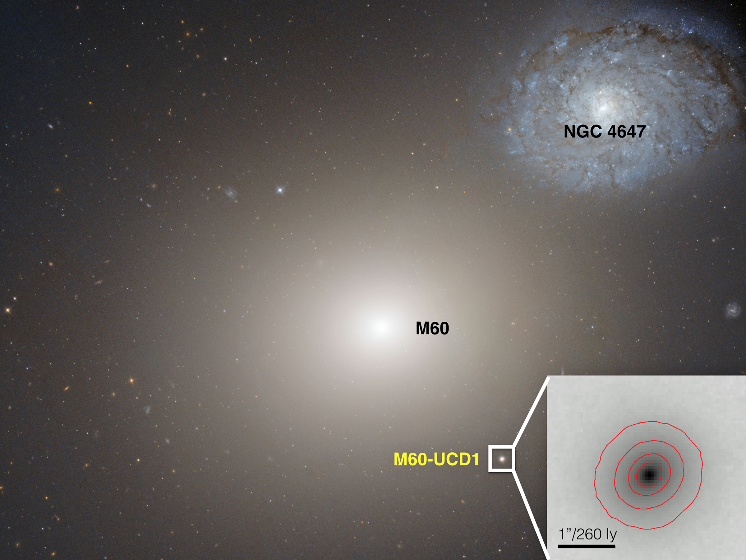 This Hubble Space telescope image shows the gargantuan galaxy M60 in the center, and the ultracompact dwarf galaxy M60-UCD1 below it and to the right, and also enlarged as an inset. A new international study led by University of Utah astronomer Anil Seth and published in the journal Nature found that M60-UCD1 is the smallest known galaxy with a supermassive black hole at its center, suggesting the dwarf galaxy originally was much larger but was stripped of its outer layers by gravity from galaxy M60 over billions of years. M60's gravity also is pulling galaxy NGC4647, upper right, and the two eventually will collide.