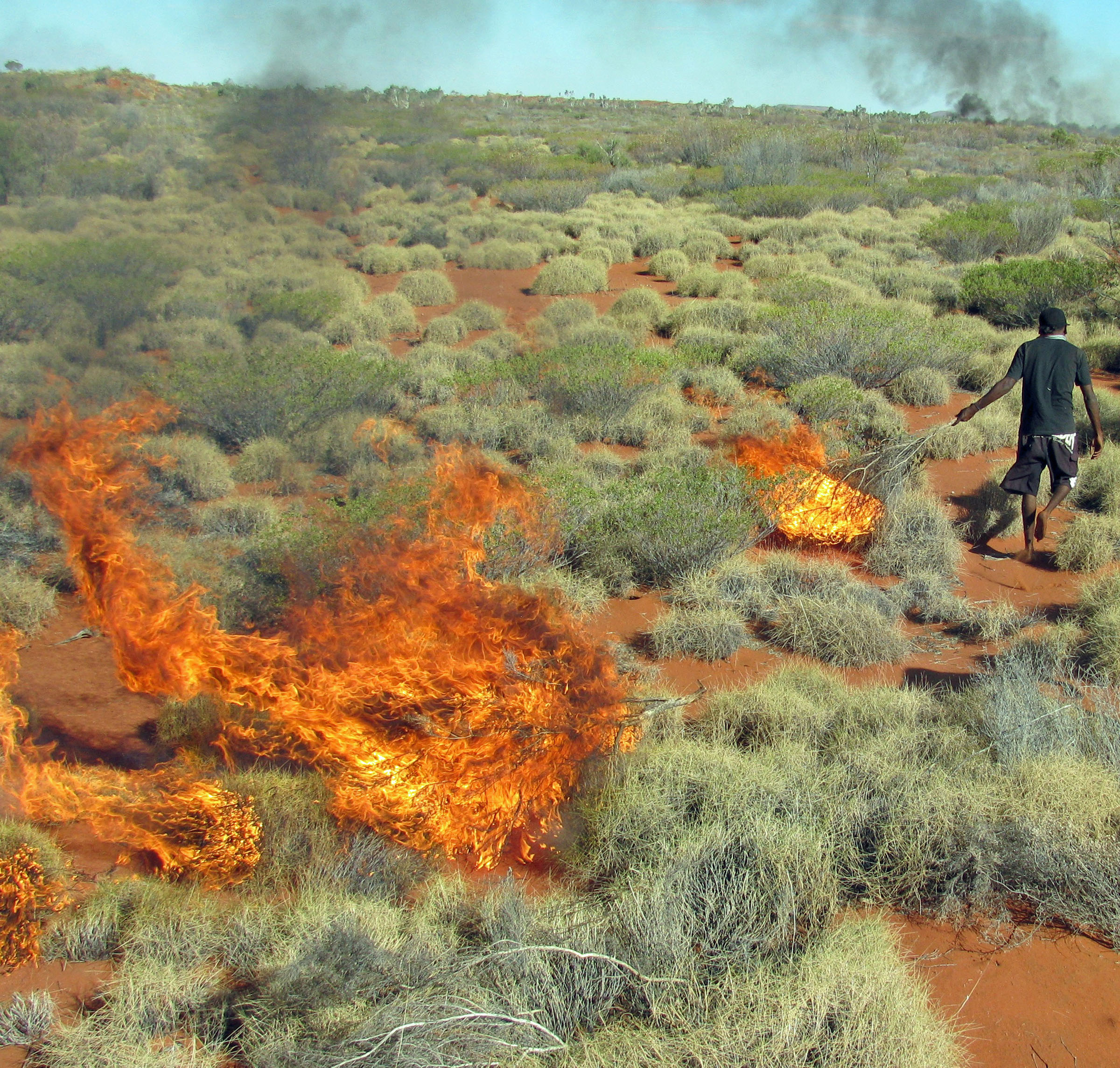 A member of the Martu Aboriginal community in western Australia sets fire to mature spinifex grass as a way to expose burrows occupied by sand monitor lizards, which are then hunted as a major food source. Hill kangaroos – also known as hill wallaroos or euros – are hunted in the same areas. A new study from the University of Utah and Stanford University found that setting such small-scale fires (10 acres or less) created a patchy landscape of different ages of vegetation, boosting kangaroo populations by providing them with shoot and fruits to eat in younger patches, and shelter from predators like dingoes in older patches of bush