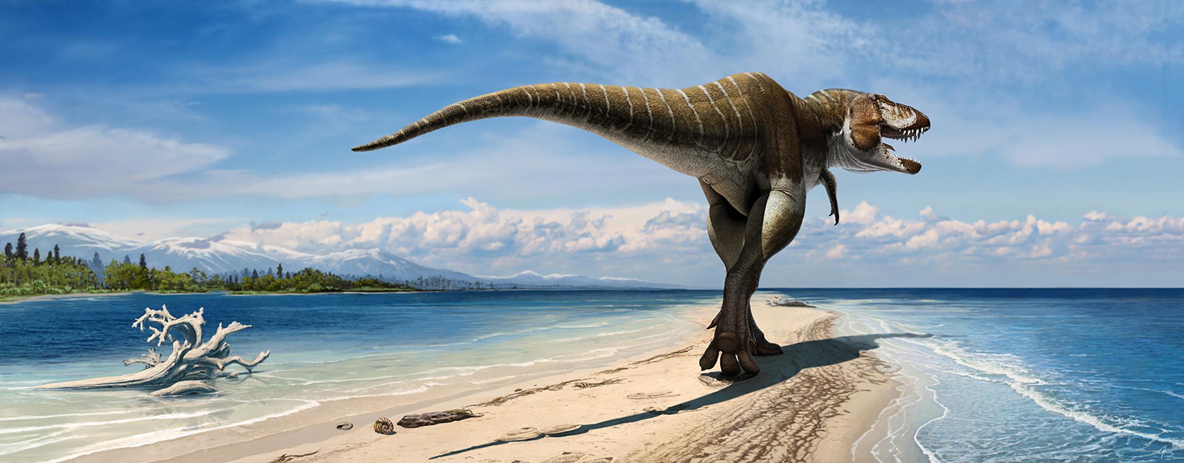 Wahweap coastline tyrannosaur.