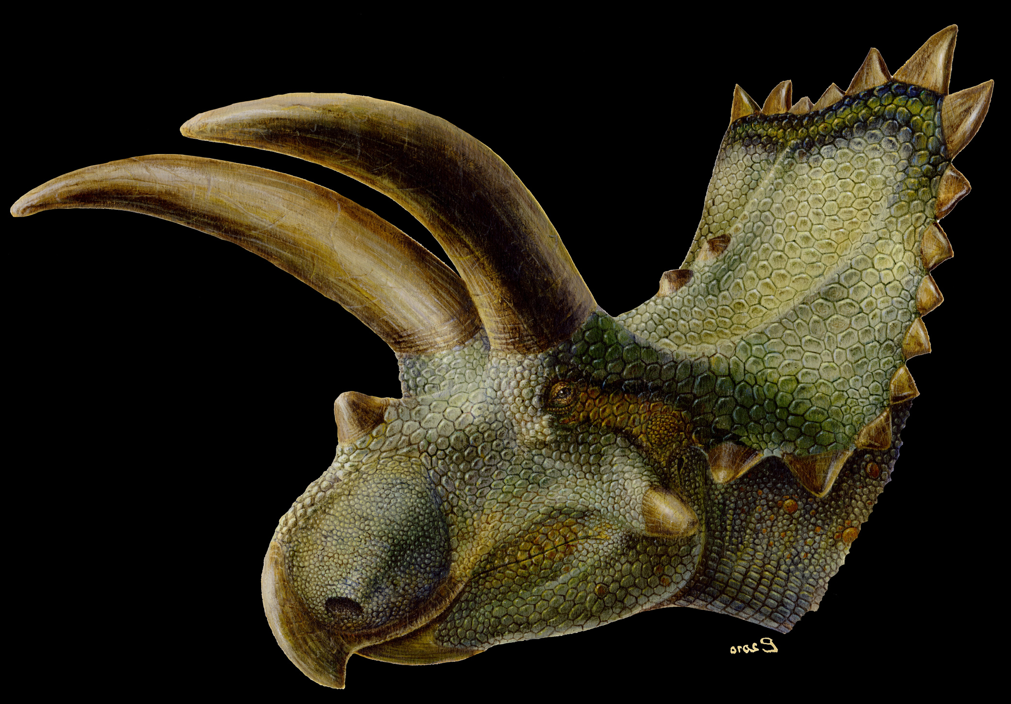 Fleshed-out artist rendering of Coahuilaceratops.