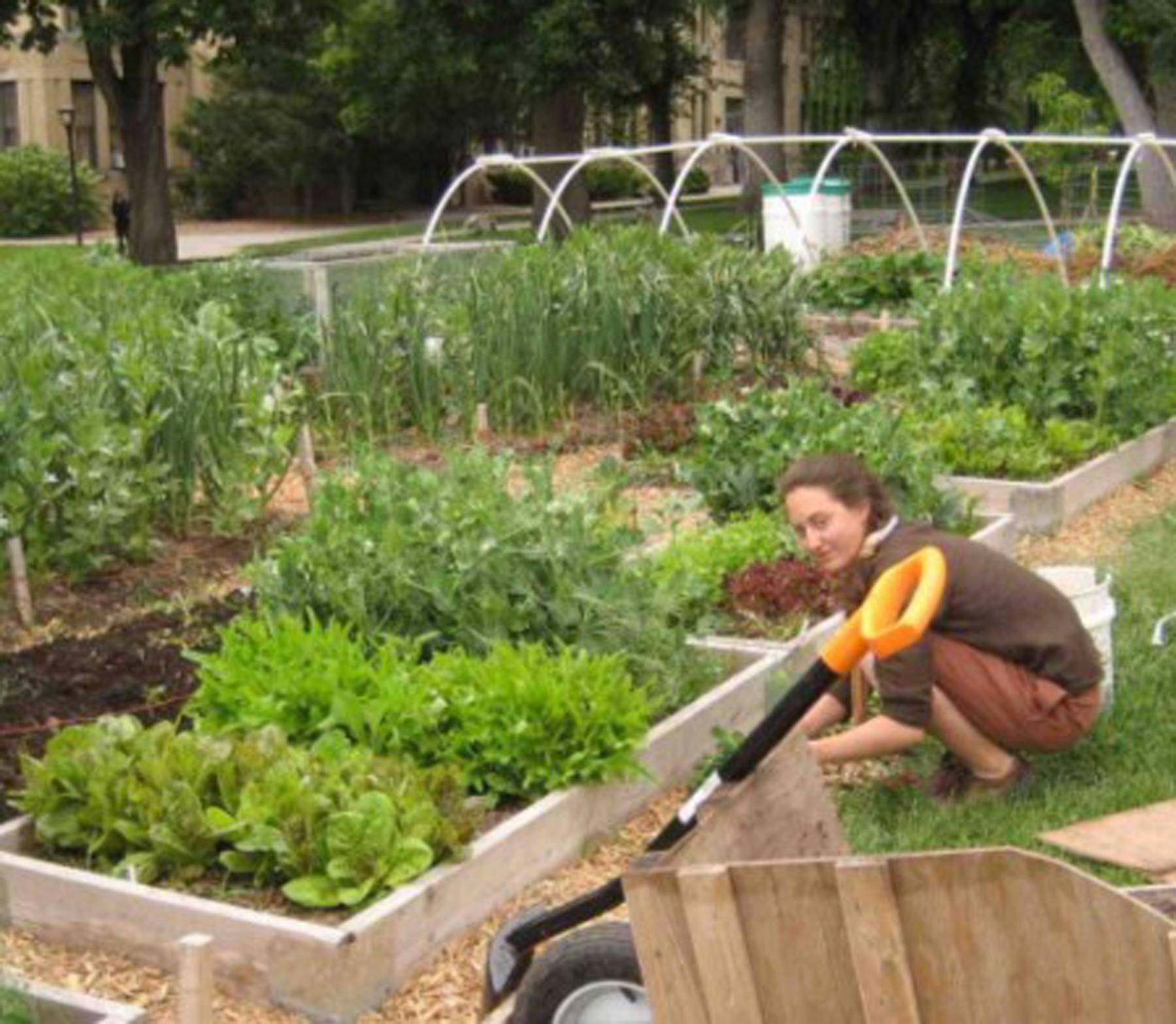Student Alexandra Parvaz works in Edible Campus Gardens.