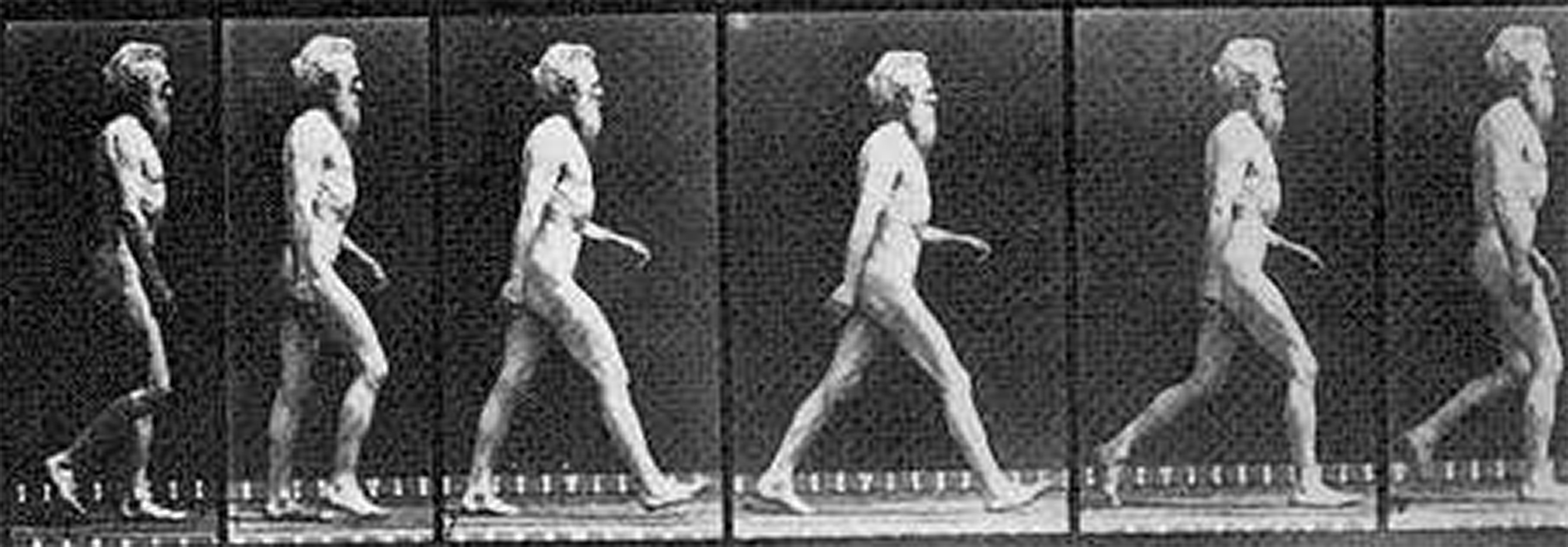 English photographer Eadweard Muybridge (1830-1904), who pioneered the use of multiple cameras to capture motion, is shown walking heel-first as humans usually do. A new University of Utah study shows that stepping onto the heel first requires much less energy than putting the ball of the foot or the toes onto the ground first.