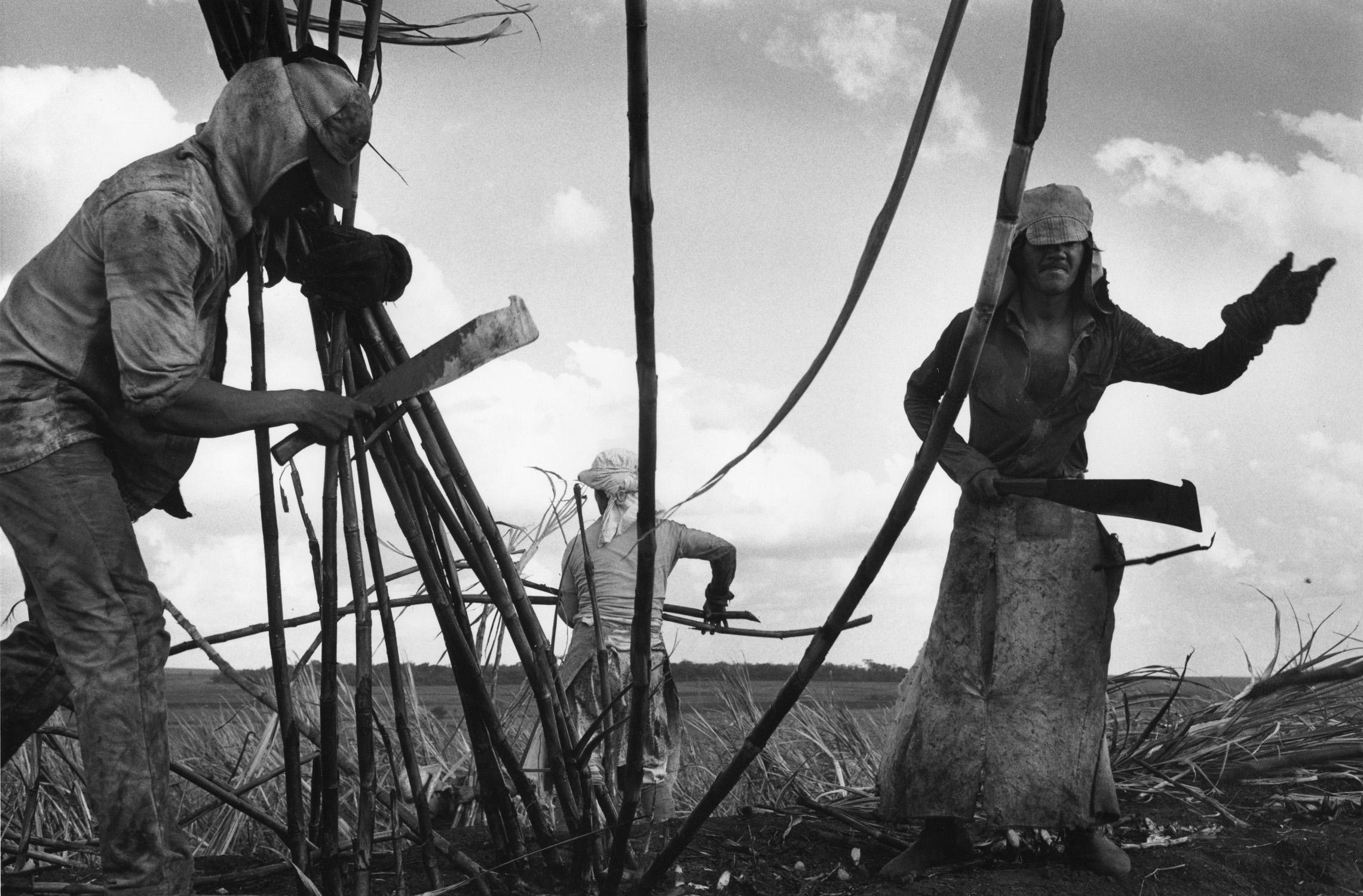 "Sebasti?o Salgado, ""Sugar-cane Plantations"", 1987. gelatin silver print"