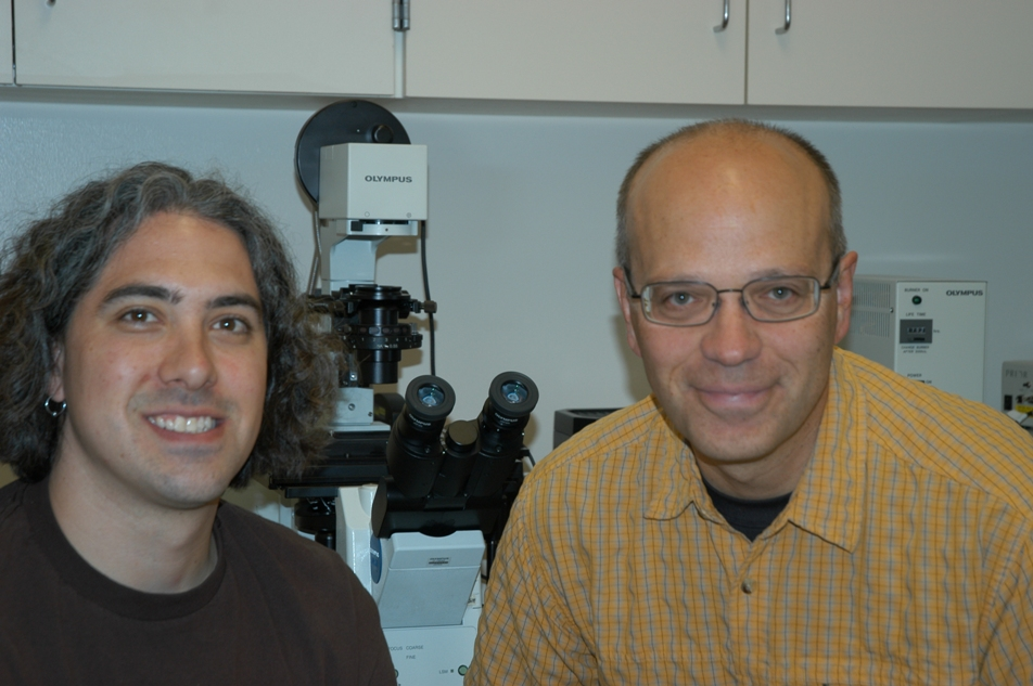 University of Utah biologists Simon Titen and Kent Golic conducted a new study showing that the loss of a single telomere -- the end of a chromosome -- within a cell may be the main event that starts a cell on the road to becoming cancerous.