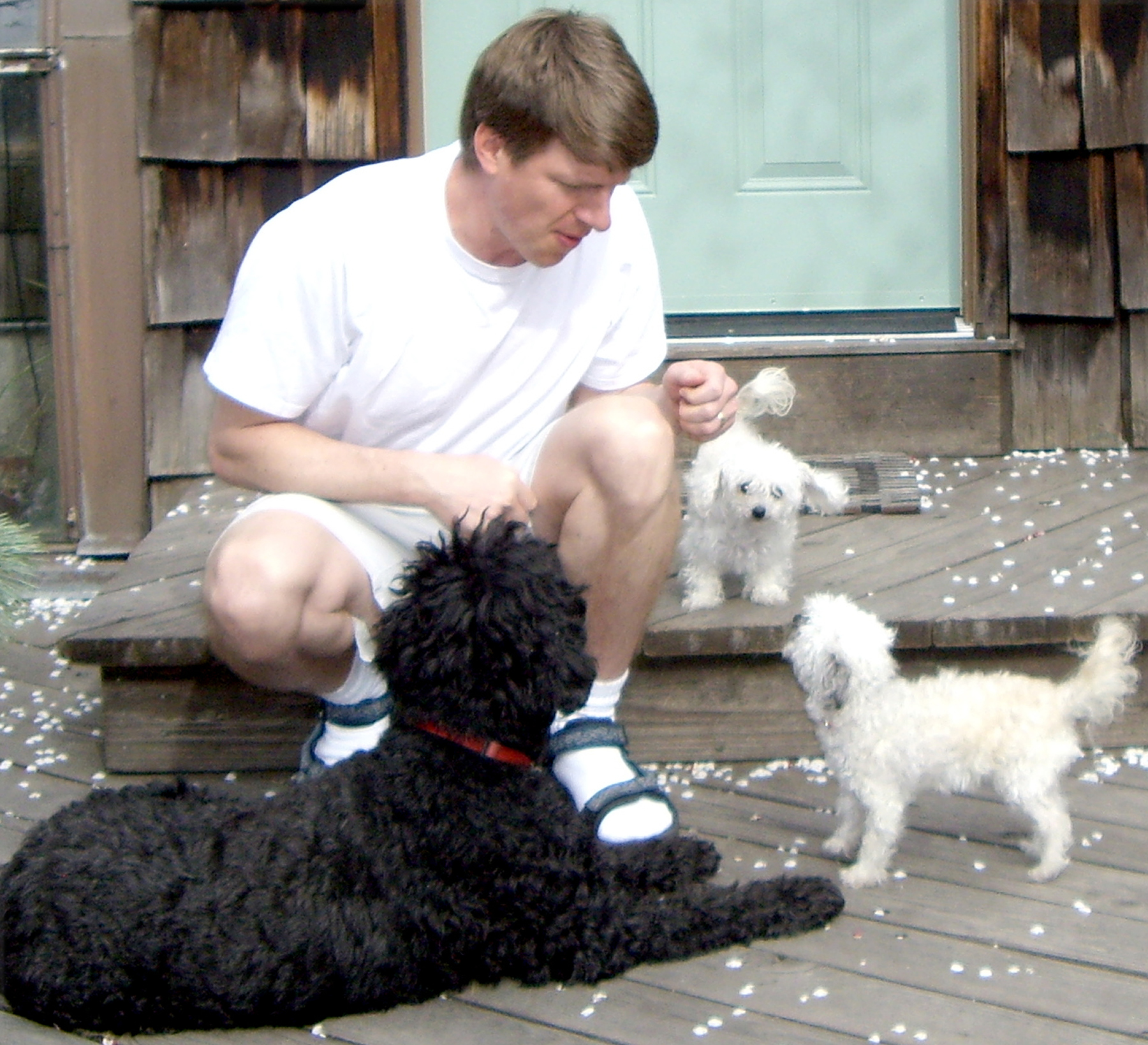University of Utah biologists K. Gordon Lark and Kevin Chase were part of a multi-institutional team that identified ancient genetic material responsible for making small dogs small. Here, Chase plays with his toy poodle-Maltese mixes, Bonbon and Fille, while Lark's medium-sized Portugese water dog, Mopsa, rests at Chase's feet.