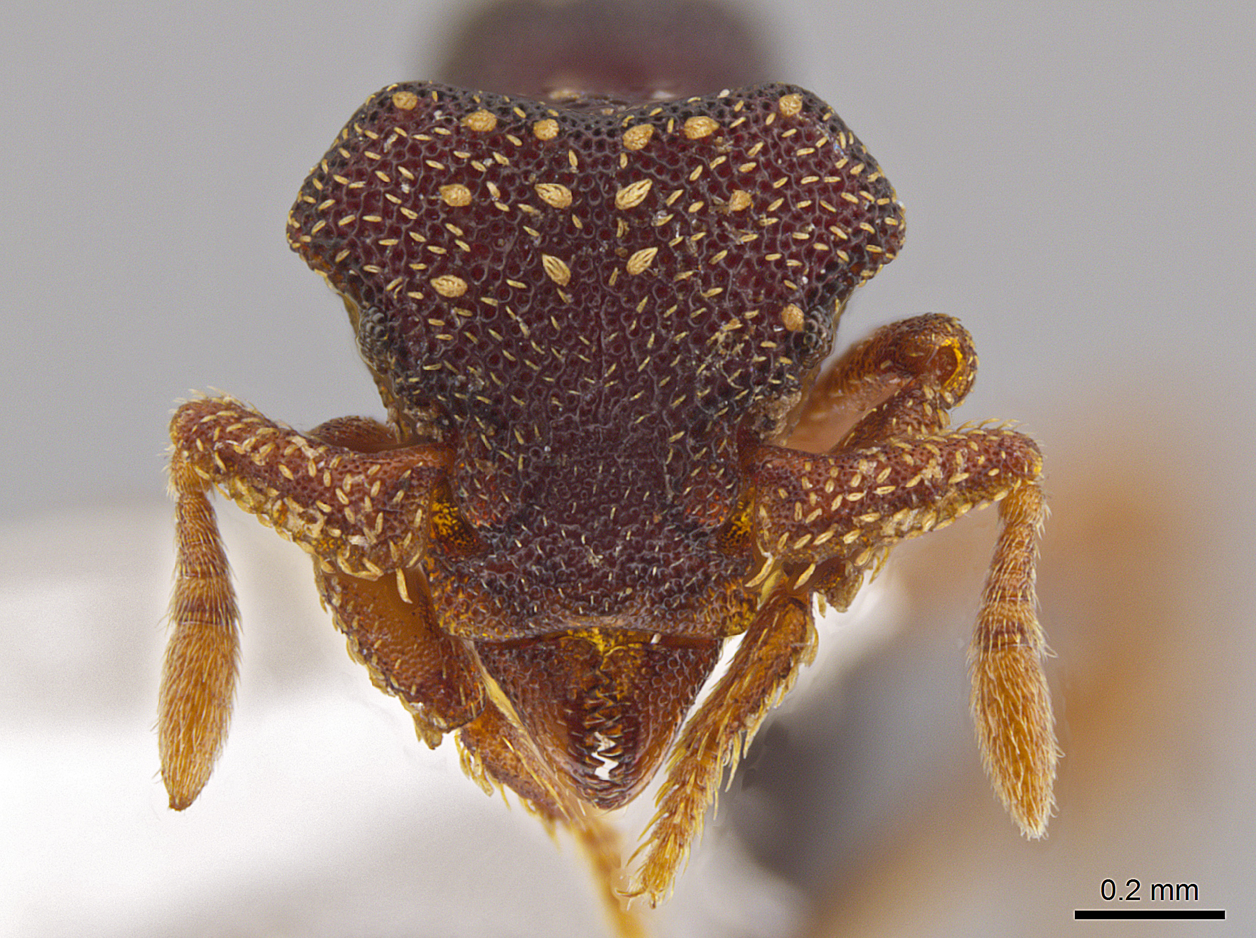 This photo shows the magnified monster-like face of the ant Eurhopalothrix zipacna, named after Zipacna, a vicious, crocodile-like demon of Mayan mythology. Found in the mountains of Guatemala and Honduras, it is among 33 new ants species discovered in Central America and the Caribbean by Jack Longino, a biologist at the University of Utah.